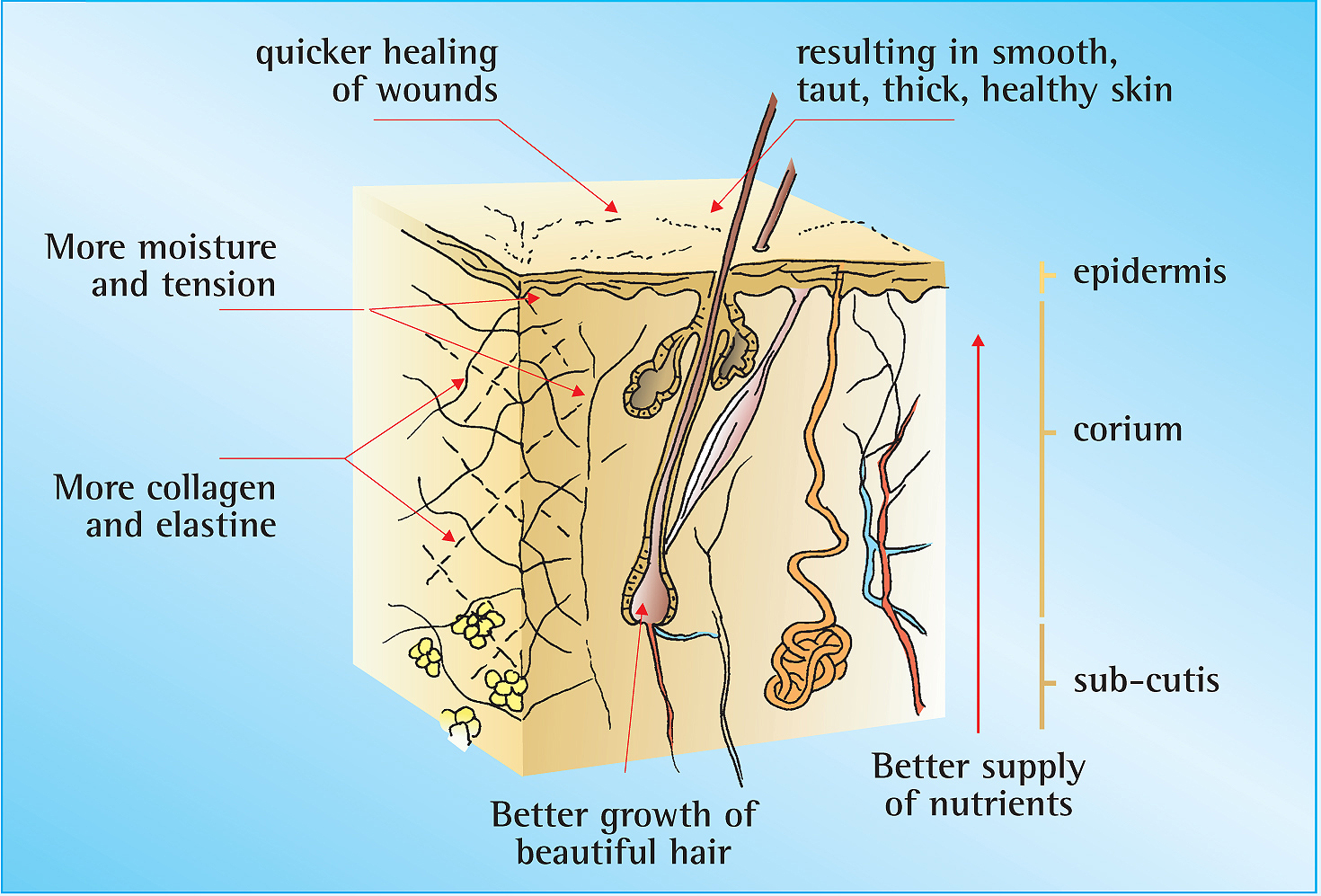 What Silica does to the skin